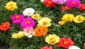 Chăm sóc hoa tại nhà, chăm sóc hoa lan, hoa hồng...tư vấn miễn phí