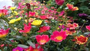 Tư vấn cung cấp lắp đặt, vật tư thiết bị tốt nhất cho vườn hoa.