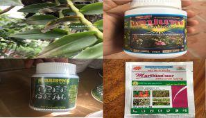 Bệnh thối nhũn hoa lan, thối nhũn lá, bệnh nấm, chữa trị hiệu quả