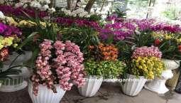 Thiên Đường Ngàn Hoa – Các Loại Hoa Năm Nay Biến Đổi Ra Sao