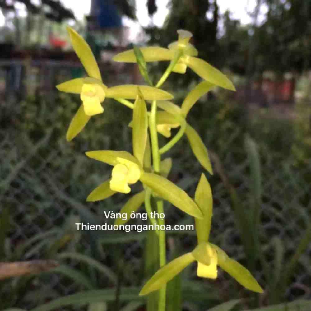 Địa Lan Vàng Ông Thọ, Địa Lan Rừng Việt Nam-Thiên Đường Ngàn Hoa