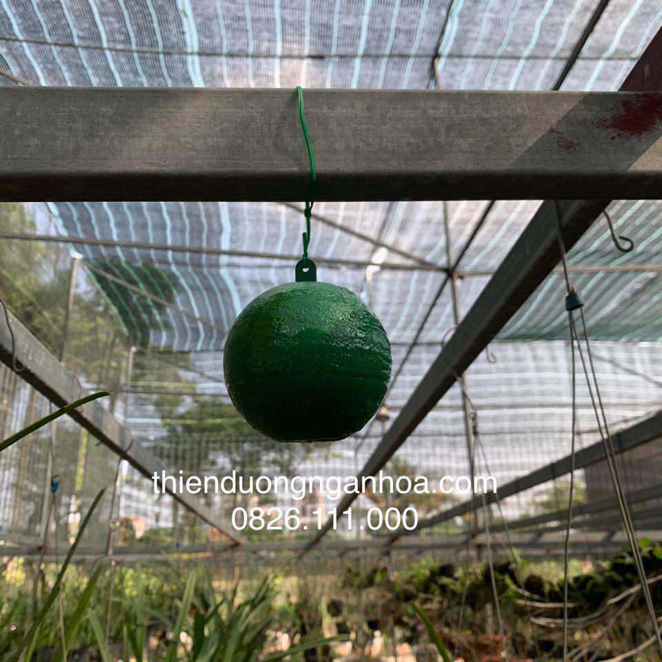 Bóng dính bẫy côn trùng treo dàn lan và dàn các loại cây ăn quả khác, an toàn hiệu quả