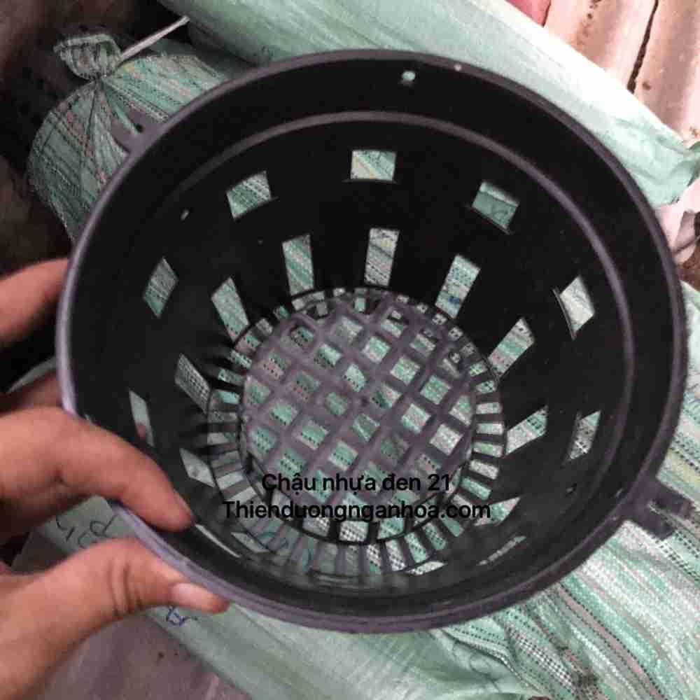 Chậu nhựa 21 trồng lan, mua bán chậu nhựa 21 sll tại Hà Nội
