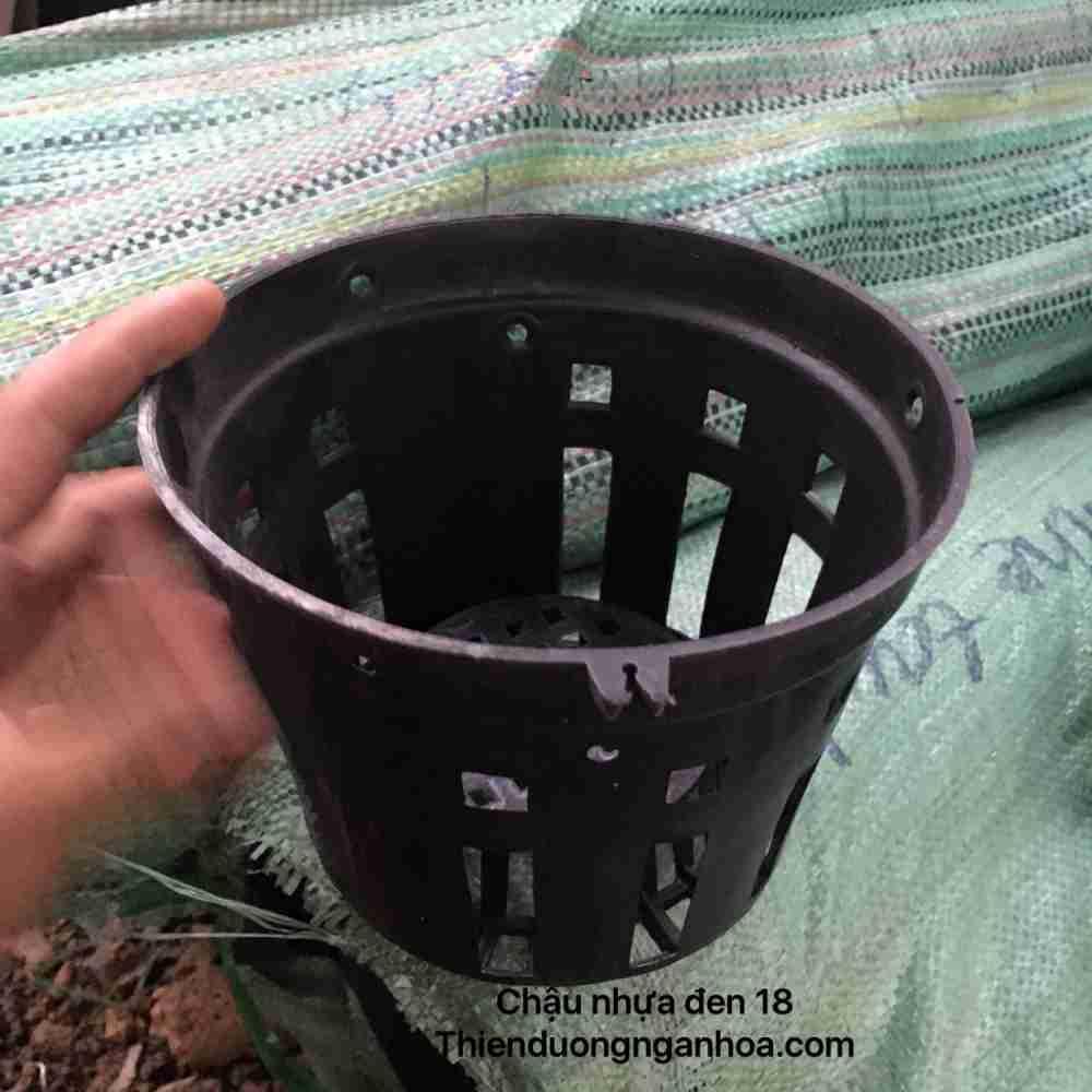 Chậu nhựa đen 18, chậu nhựa 18 trồng phong lan, mua bán chậu sll